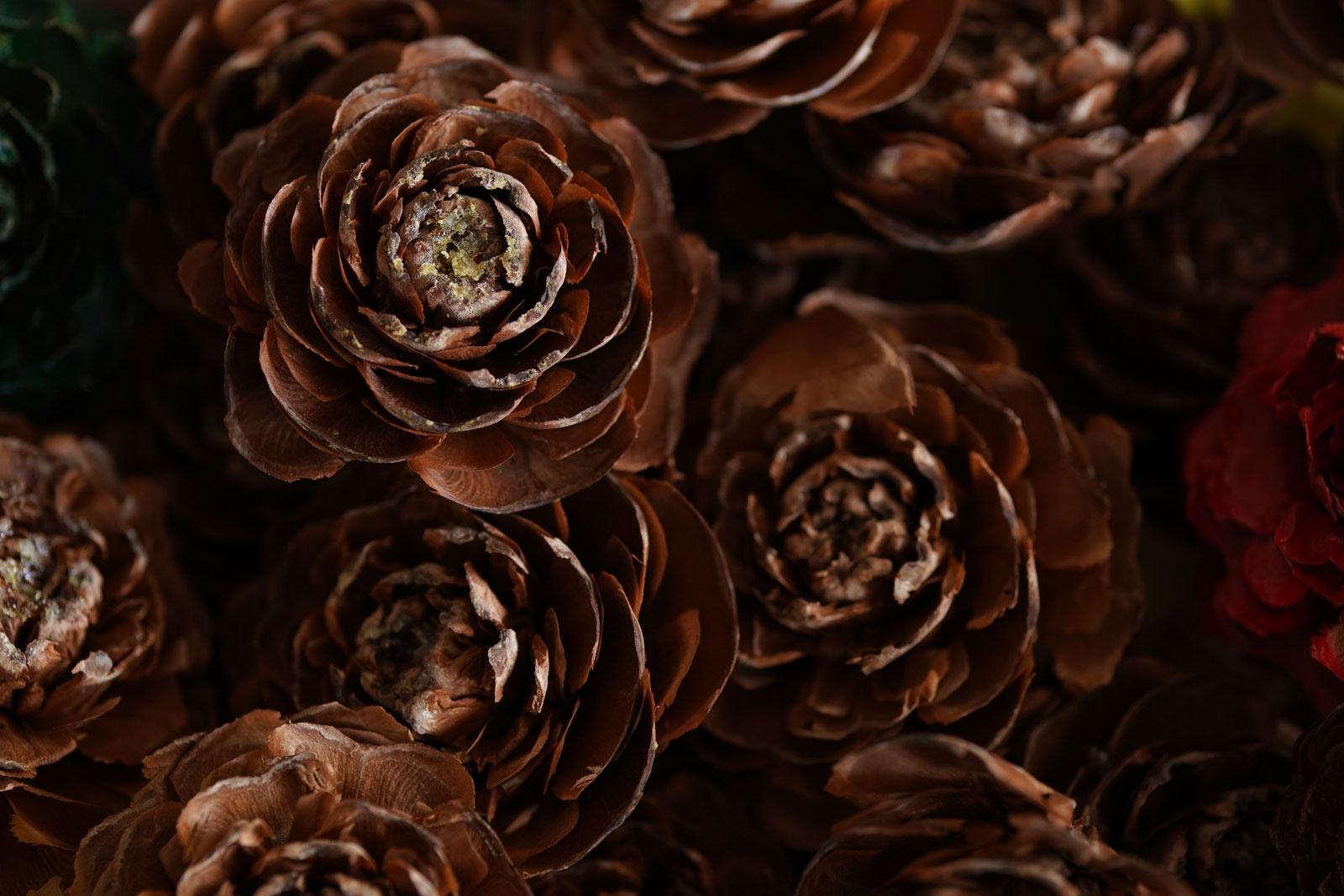 Tokina Firin 100mm F2.8 FE Macro Lens Sample Image of flower in a bunch.jpg