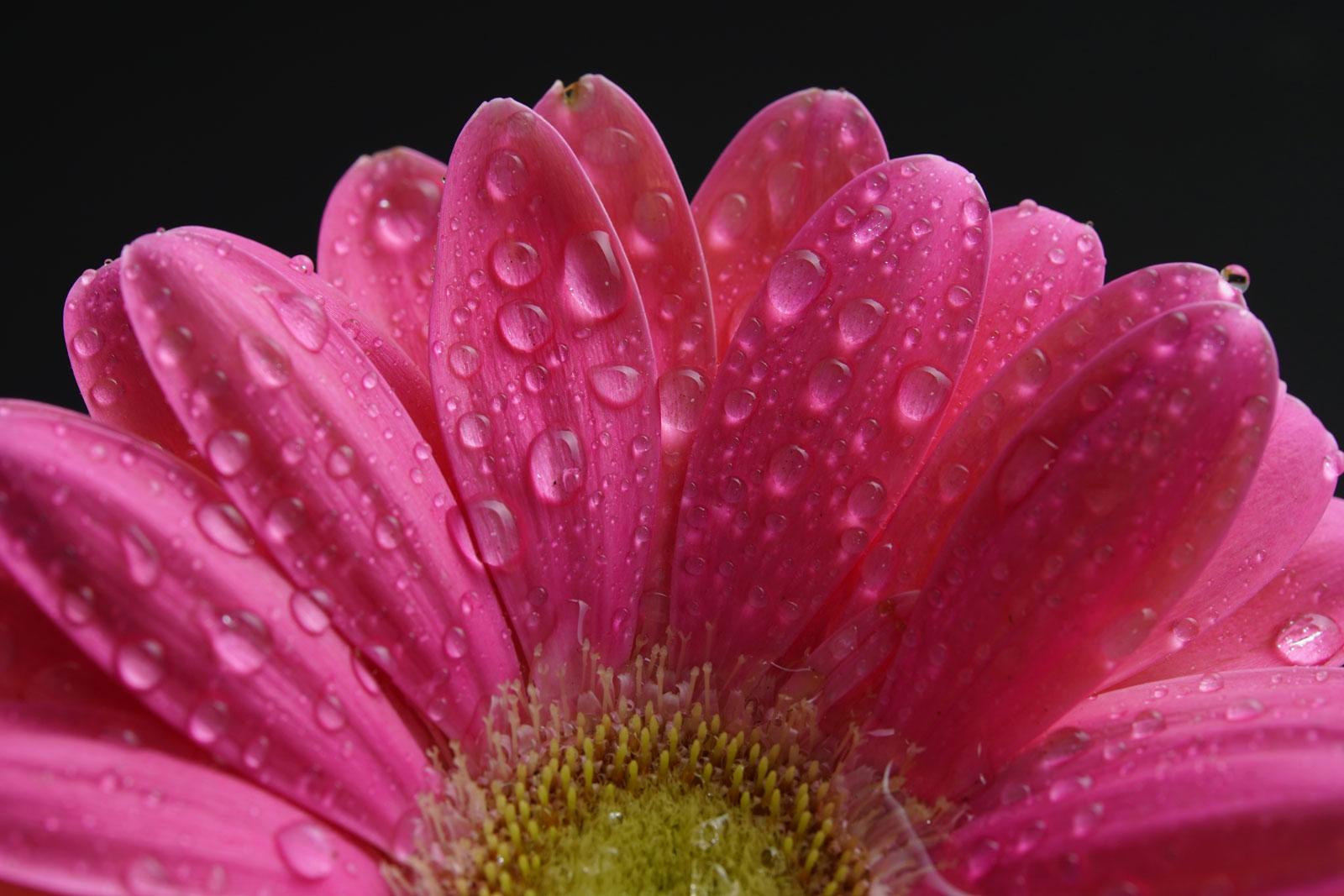 Tokina Firin 100mm F2.8 FE Macro Lens Sample Image of flower.jpg